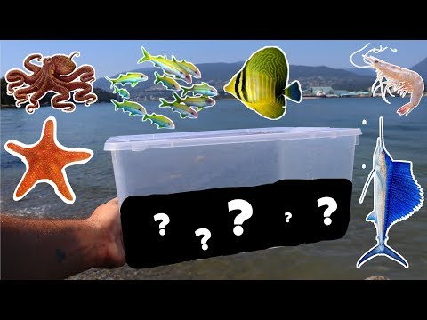Catching Salt Water Fish With Dollar Store Fish Trap (DIY Fish Trap)