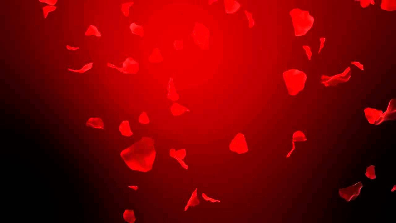Картинки лепестки роз падают