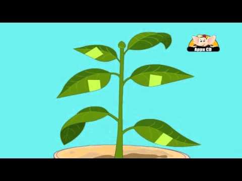 Photosythesis animation