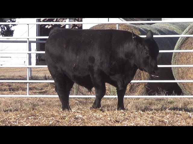 Express Ranches Lot 348