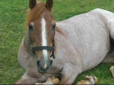 een paar pony's van de stal van brenk - youtube