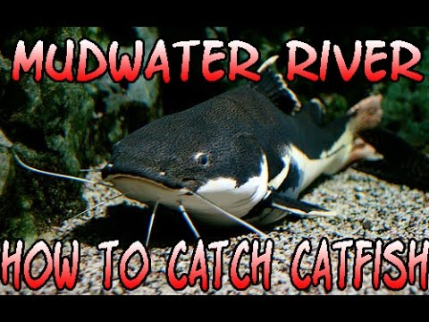 fishing planet mudwater river how to catch catfish easy xp / money