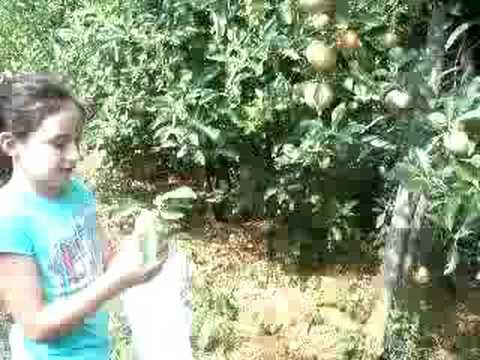 sophie and tess pick 2 apples