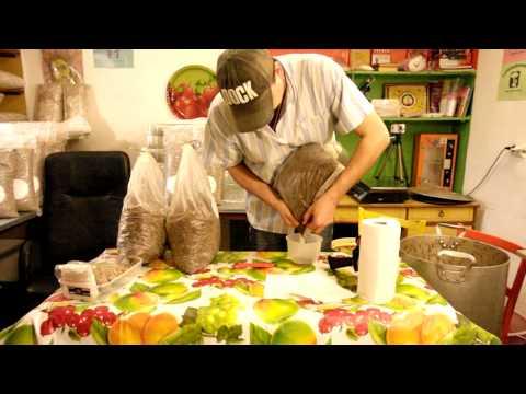 выращивание грибов шиитаке в теплице