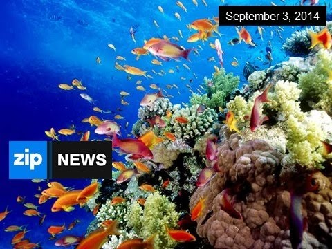 Great Barrier Reef Mining Plans Dropped - Sep 3, 2014