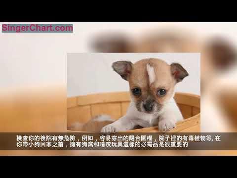 第一次養狗,將小狗帶回家要做什麼?訓犬師都幫你想好了