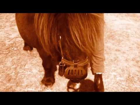 Olfert den lille hest