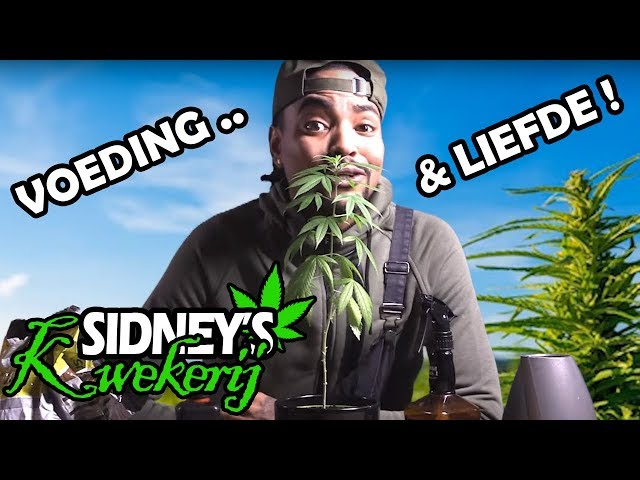 Voeding & Liefde - Sidney's Kwekerij #4