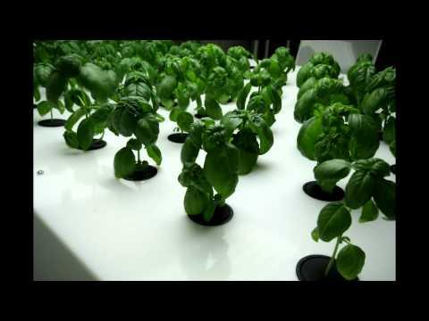 Indoor Farming with Aeroponics by Indoor Harvest