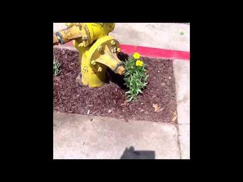 Guerrilla Gardening On Gordon Street in Hollywood Ca.