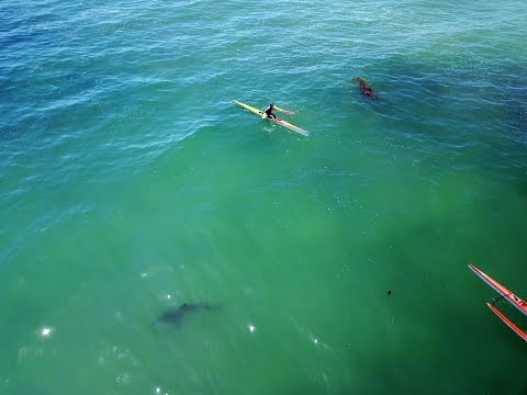 Great White Sharks off San Clemente Today