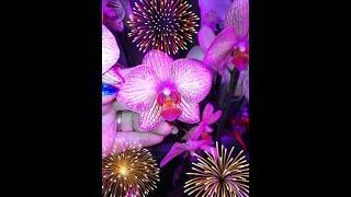 Орхидейки купленные на базе в Липецке❤️
