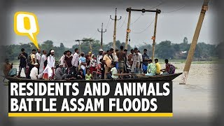 Residents and Animals Reel Under the Impact of Assam Floods | The Quint