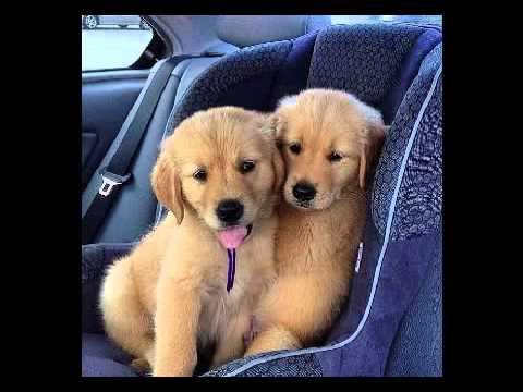 Cute Dog Images With Quotes Youtube