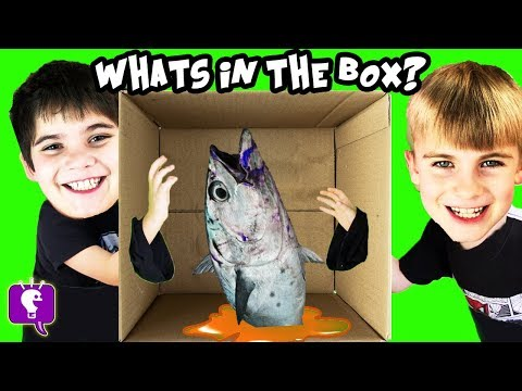 WHAT'S IN THE BOX?! They Can't See What's Inside HobbyKidsTV