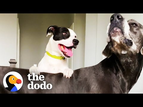 Dog's Best Friend Caught On Camera Sneaking Over To Play   The Dodo