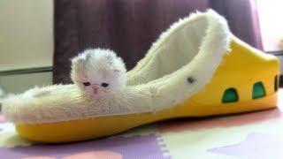 Смешные коты и котята! - 😻 Милахи коты 🐈 - Самые красивые и милые Коты