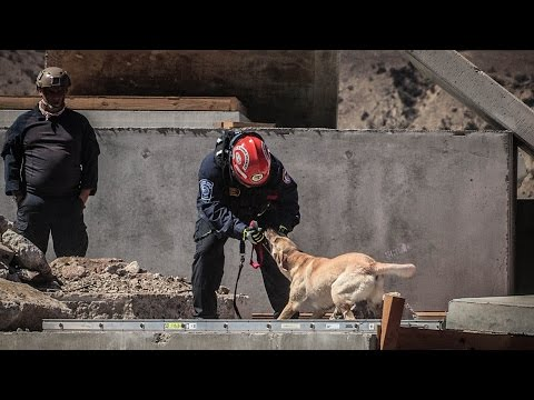 FEMA rescue dogs test for disasters