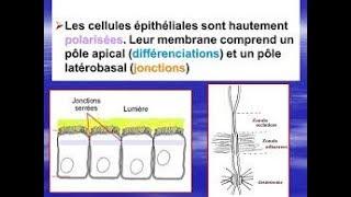 la biologie ///quand la cellule epiteliale se transforme