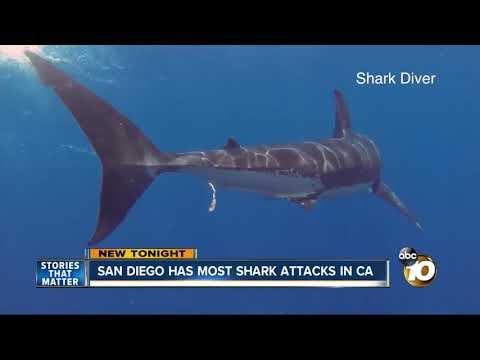 San Diego Hot Spot For Shark Attacks