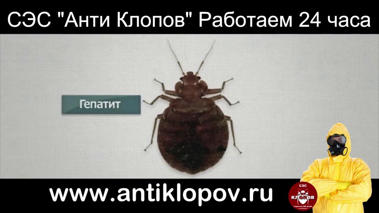 Уничтожение клопов и тараканов в Красноярск, Ачинск, Назарово .