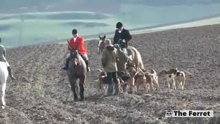 A video of a fox being torn apart by a pack of hounds has been desc...