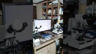 영국제 3안현미경-김치 유산균 관찰