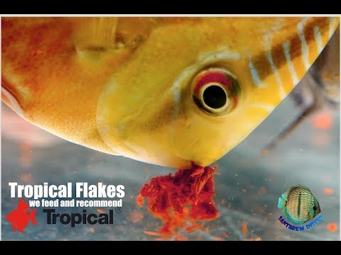 Tropical Flakes - We Feed And Recommend