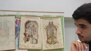 Анатомия | Пищеварительная система - Пищевод