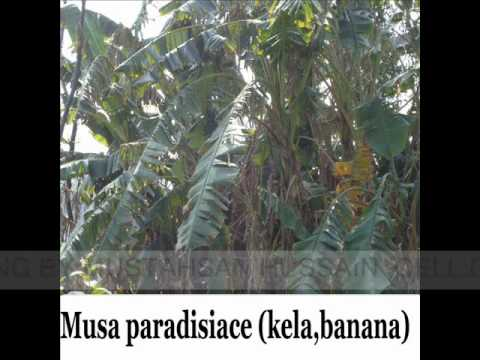 FEW PLANTS OF KAMOKE FLORA PART 1