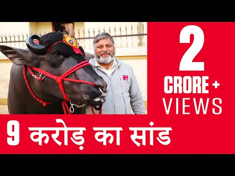 Thumbnail: India's Super Bull Yuvraj - Father of 150,000 Calves - OMG! Yeh Mera India