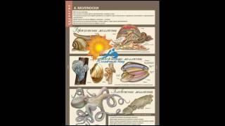 Таблицы Биология 7 класс. Животные. 12 таблиц - видео презентация.