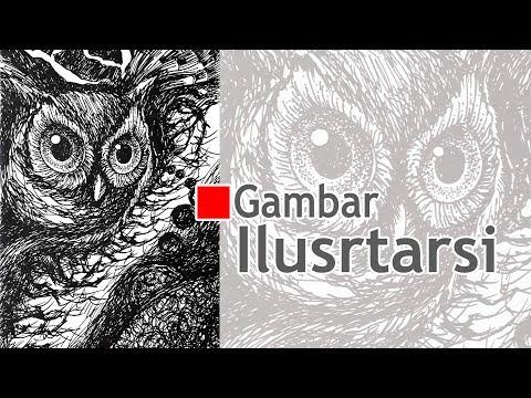Gambar Ilustrasi Burung Hantu Youtube