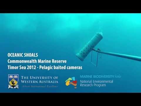 NERP Marine Hub Survey (NW Australia) - pelagic video