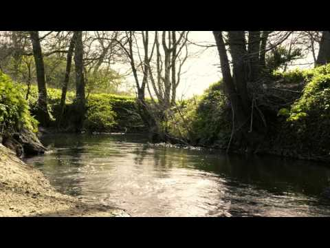 An Evening By The Stream - Fly Fishing An English River