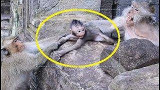 baby monkey lost mom