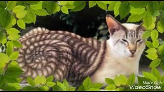 9 редких пород кошек
