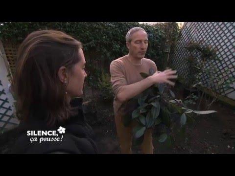 Pas de panique: Votre jardin devient un havre de paix