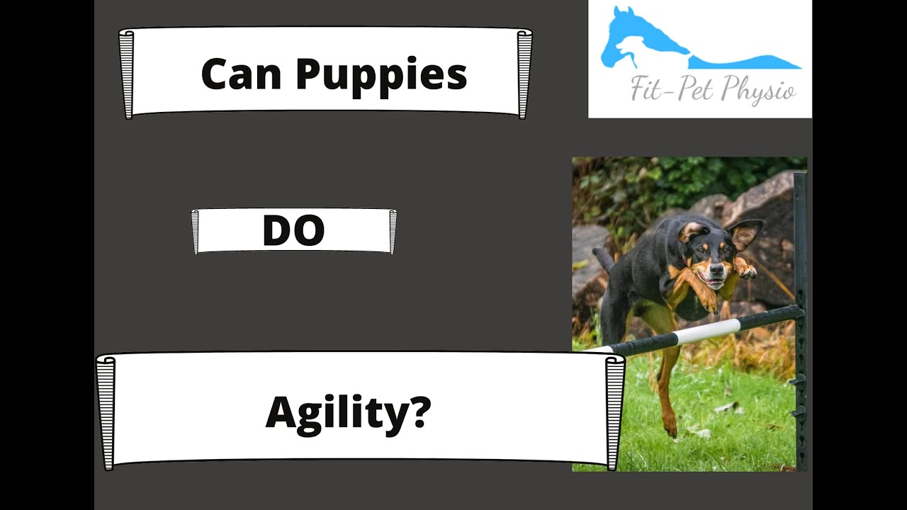 How do I start training my puppy or dog for agility?