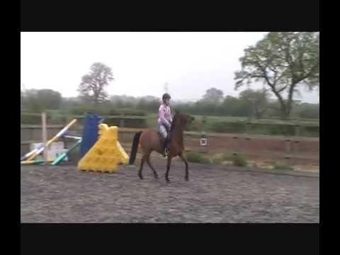 138cm Pony Jumping 1.40m ( 4ft6 ) Celtic Tigger bsja