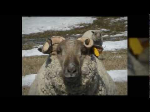grass fed beef winnipeg - grass fed beef in winnipeg