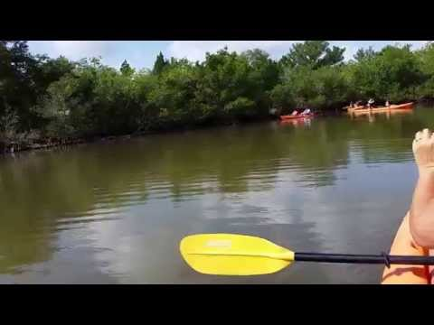 Manatee flips kayakers