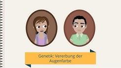 Genetik: Vererbung der Augenfarbe