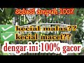 Masteran Kecial Kuning Macet Malas Auto Gacor  Dengar Ini Siaran Youtube  Mp3 - Mp4 Download