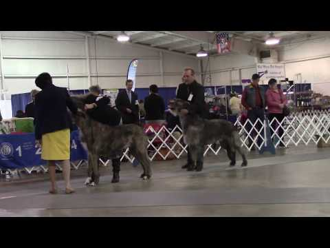 3-23-2019 Tupelo Kennel Club - Irish Wolfhounds