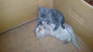 Котята милые и смешные. Приколы про кошек и котят