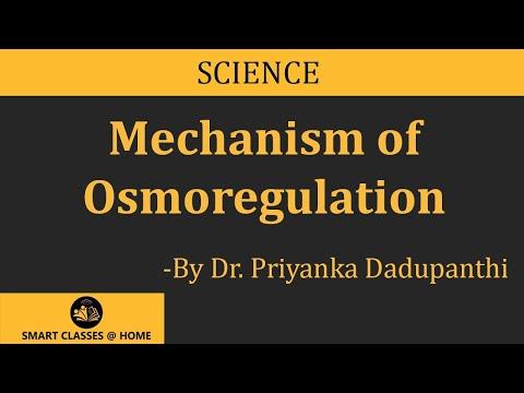 Mechanism Of Osmoregulation (B.Sc, M.Sc)