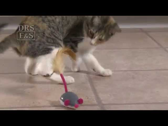 Cheese Chaser Remote Controlled Mouse Toy Drsfostersmith Com