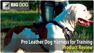 American Bulldog And Other Dogs Wearing Pro Leather Harness