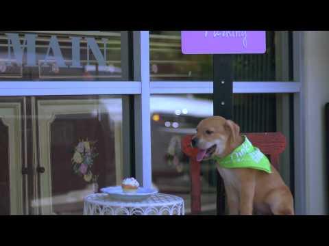 Highlight Video For San Antonio Pets Alive!